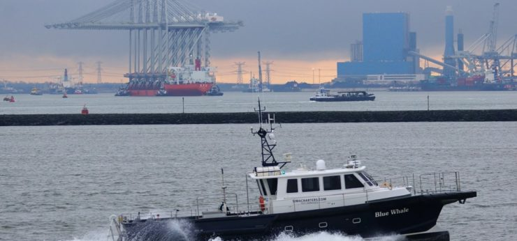 Blue-Whale-with-new-ECT-container-cranes-on-background-14-01-2014